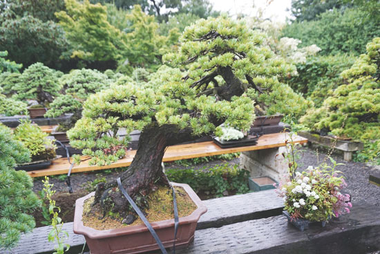 Bonsai Bonsaiya Abe Fukushima City (12)